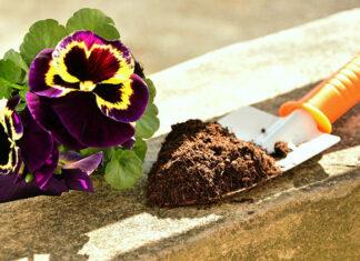Czym jest hydrożel i jak można wykorzystać go w uprawach roślin